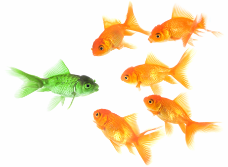 Green-fish 1