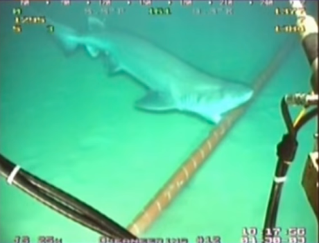 google-has-to-wrap-its-underwater-cables-in-kevlar-to-protect-them-from-sharks.jpg